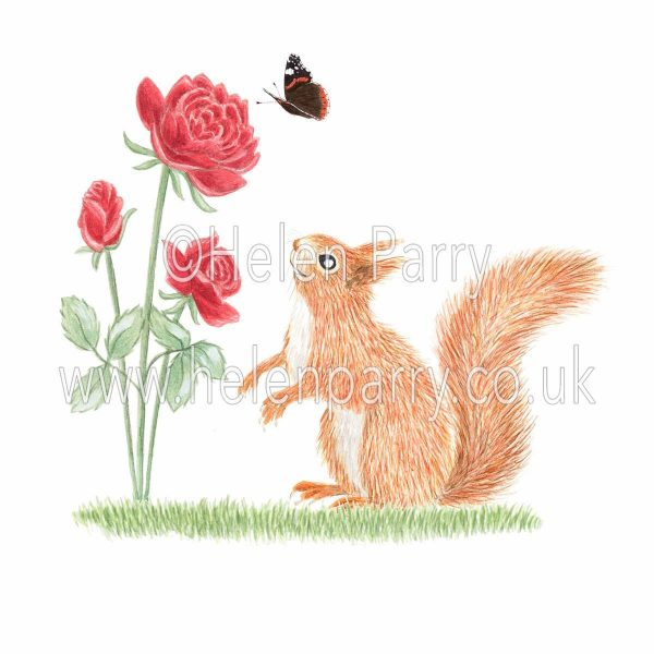 Watercolour painting of red squirrel looking up at red roses and butterfly