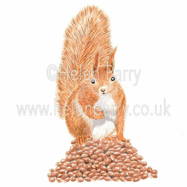 Watercolour painting of red squirrel sitting on pile of nuts