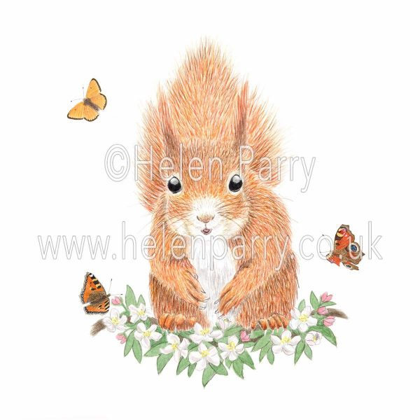 Watercolour painting of red squirrel sitting on branch of blossom
