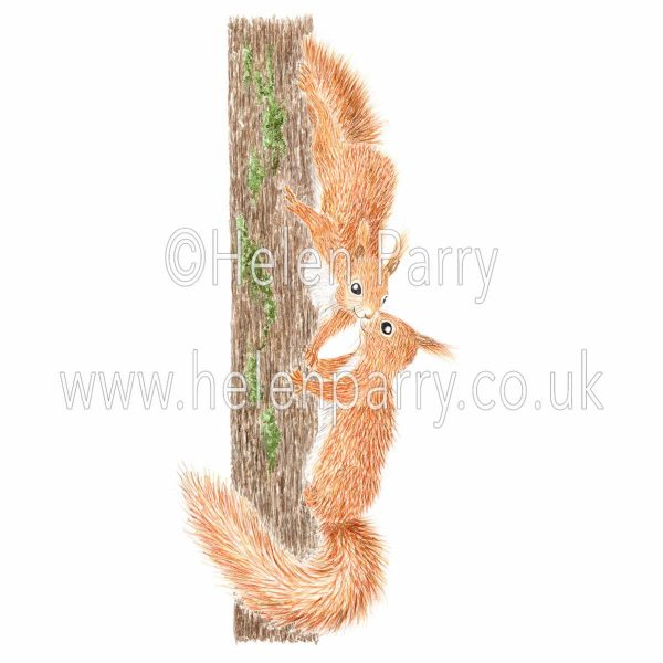Watercolour painting of two red squirrels meeting on a tree trunk