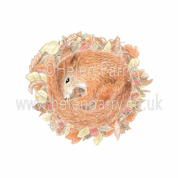 Watercolour painting of baby red squirrel curled in leaves