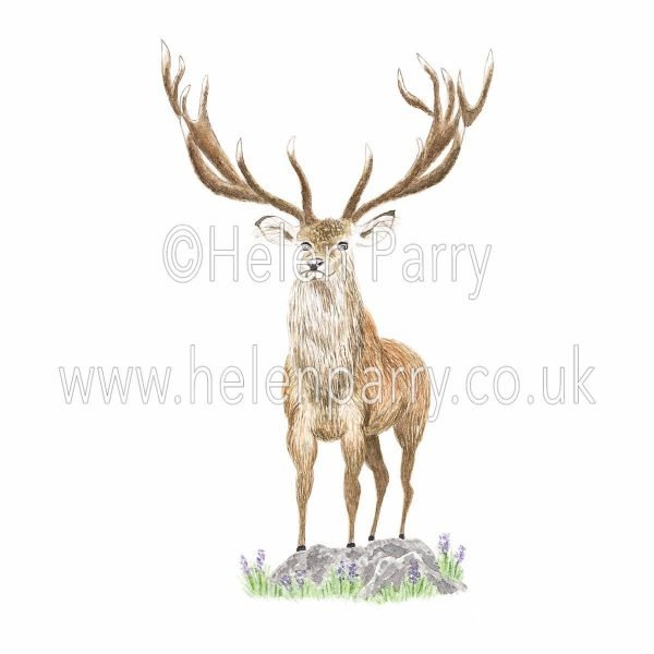 watercolour painting of old majestic stag standing on rock