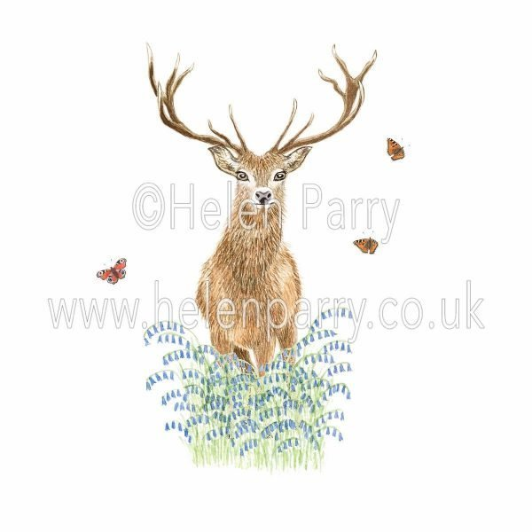 watercolour painting of stag deer amongst bluebells