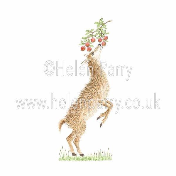 watercolour painting of doe deer on hind legs eating apples