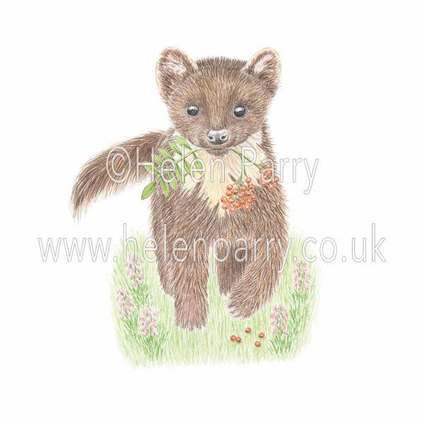 greeting card of pine marten poaching rowan berries
