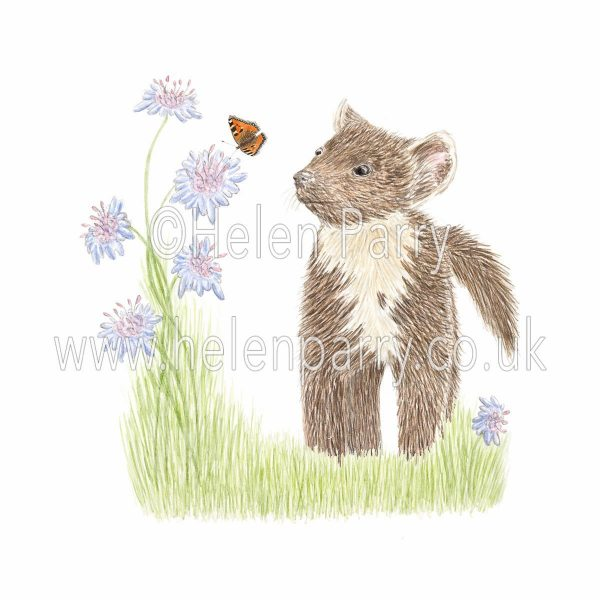 framed greeting card of curious pine marten watching a butterfly