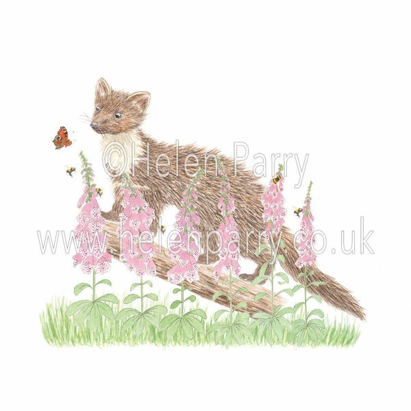 framed greeting card of inquisitive pine marten amongst foxgloves and bees