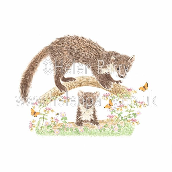 greeting card of pine marten keeping an eye on young pine marten from a branch