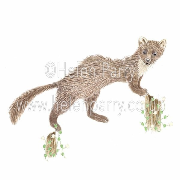 greeting card of pine marten making a lucky leap from one tree stump to another