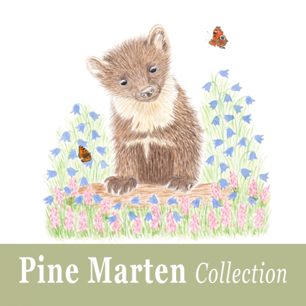 Pine Marten Collection
