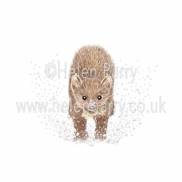 greeting card of pine marten running in snow