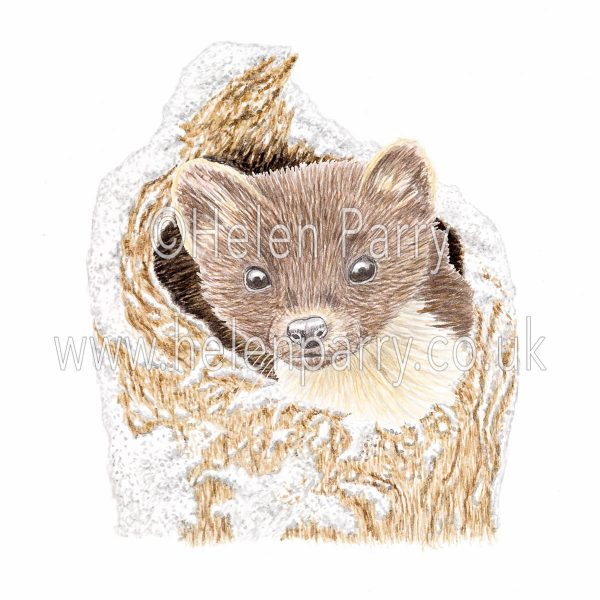 greeting card of pine marten in snowy tree hollow