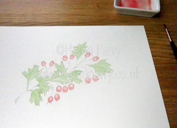 watercolour hawthorn berries by Helen Parry