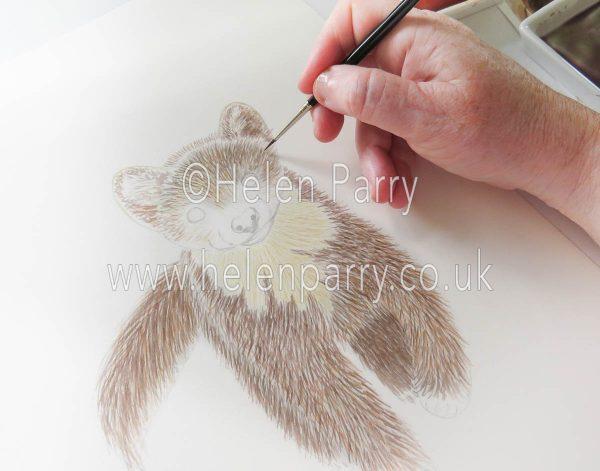 work in progress of pine marten watercolour