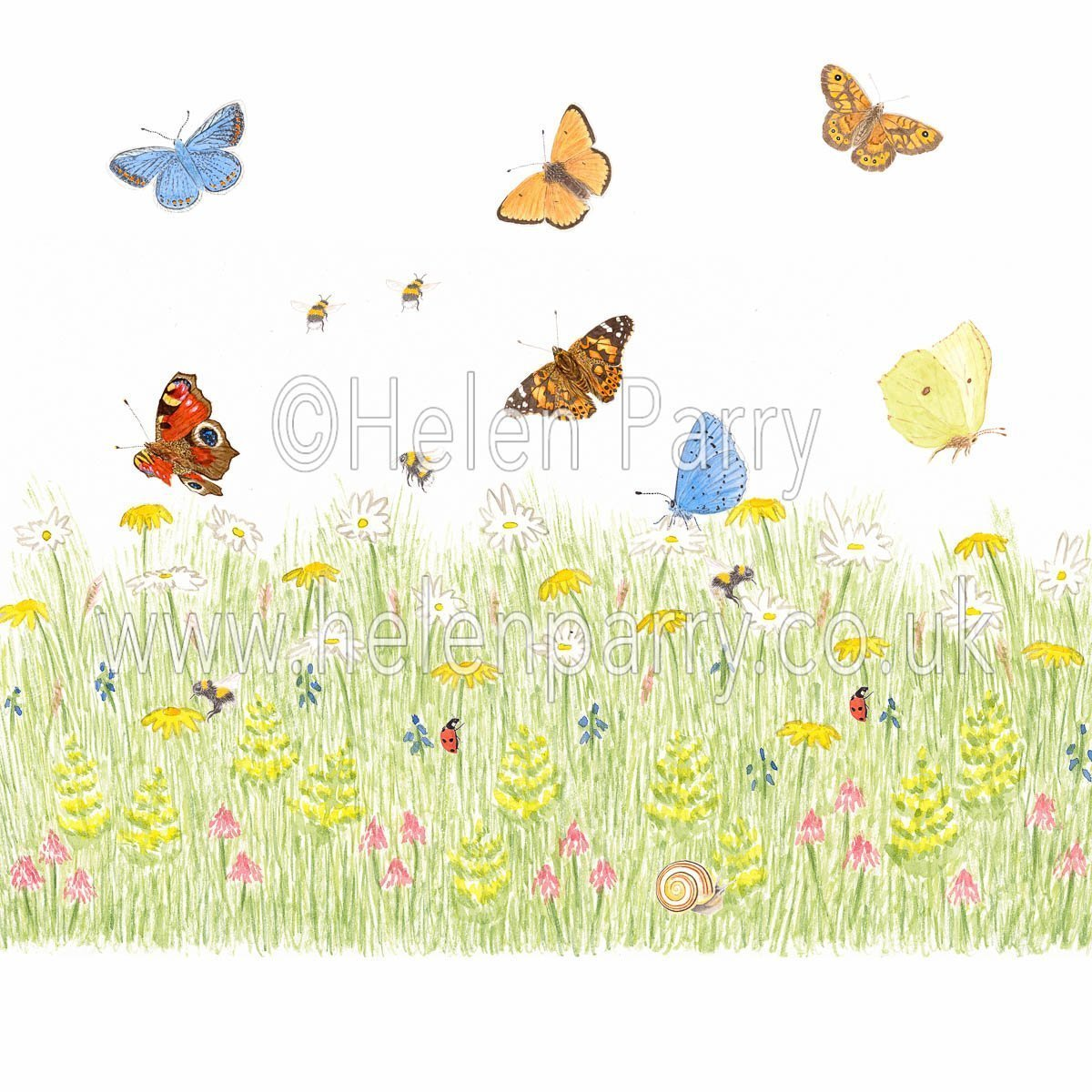 greeting card Daisy meadow with yellow bedstraw orchids and butterflies bees