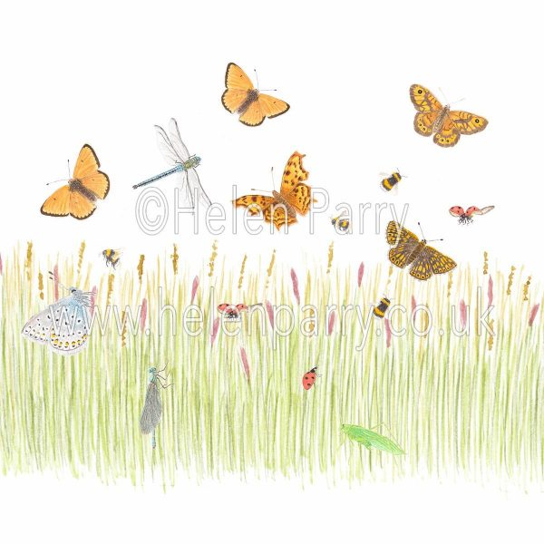greeting card Dragonfly meadow with grasshopper butterflies, bees and ladybirds