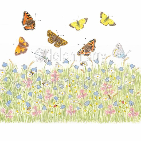 greeting card harebell meadow ragged robin and daises with butterflies bees and dragonfly