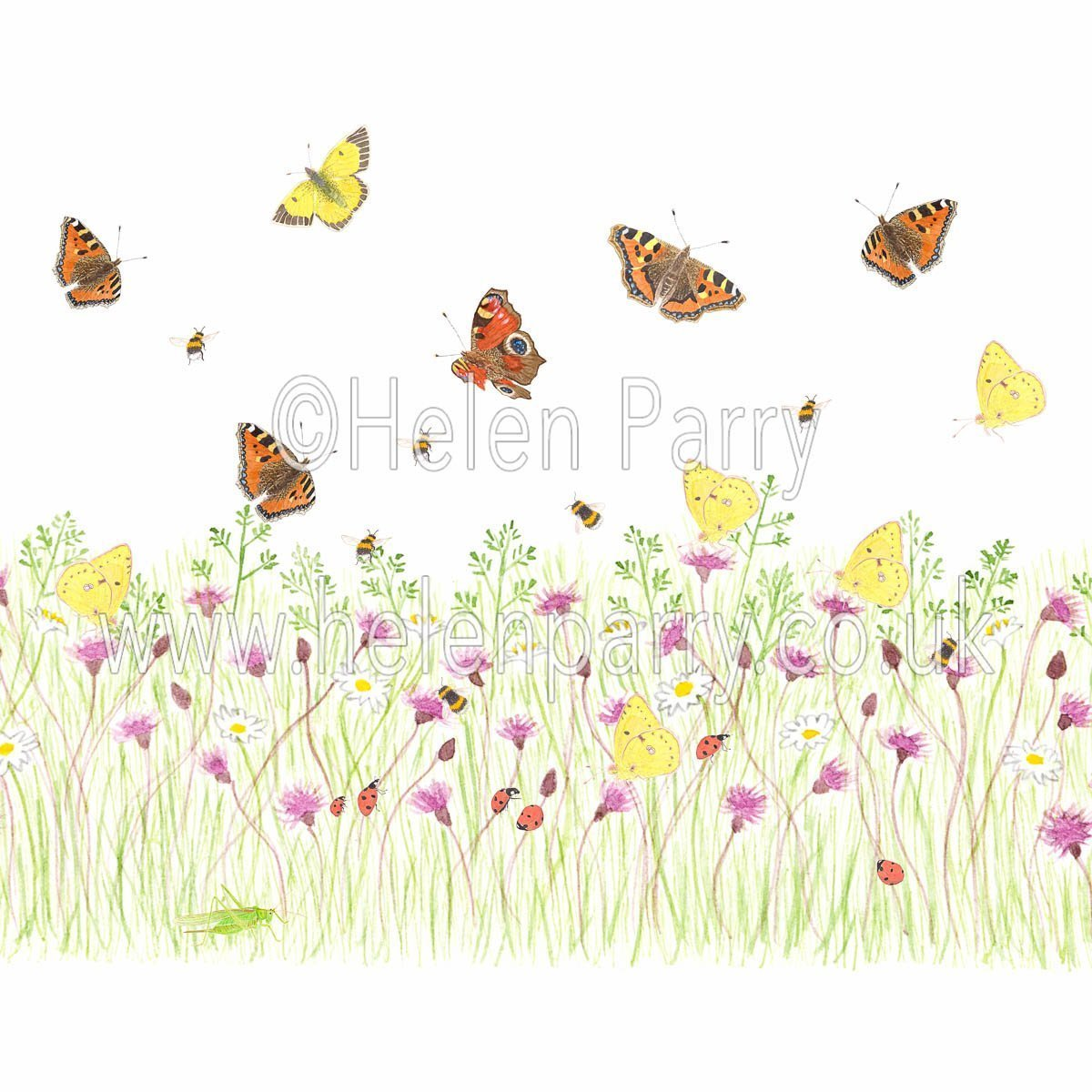greeting card pink thistle meadow with grasses butterflies ladybirds bees and grasshopper