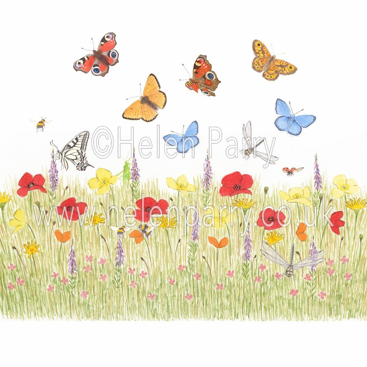 framed greeting card poppy meadow with daises, purple toadflax, butterflies, bees, dragonfly, ladybirds