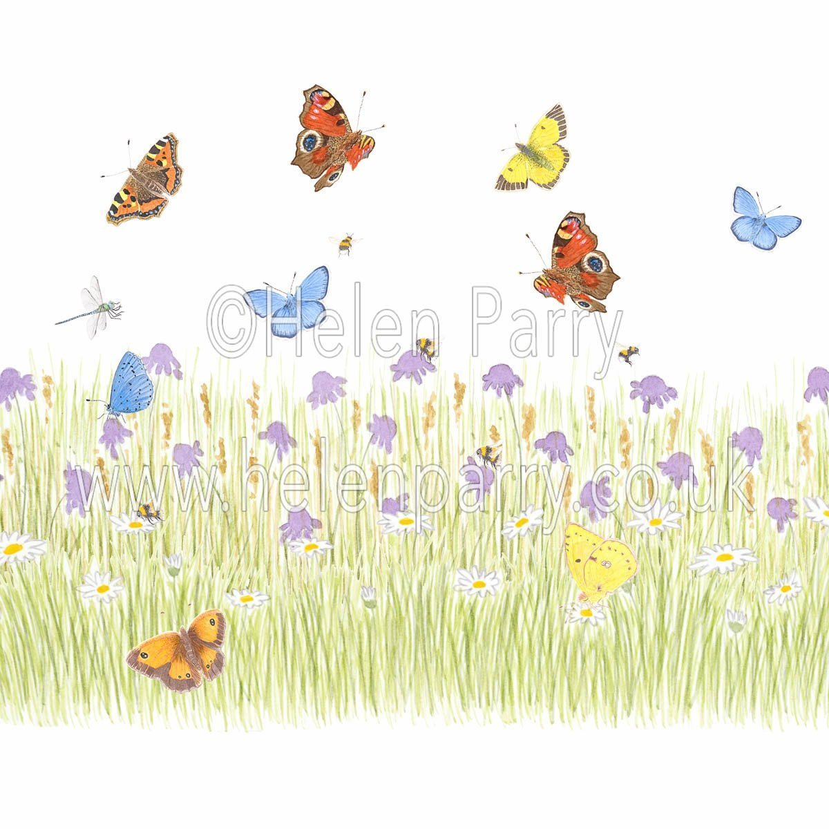 greeting card spring meadow with daises and field scabious, dragonfly, butterflies, bees