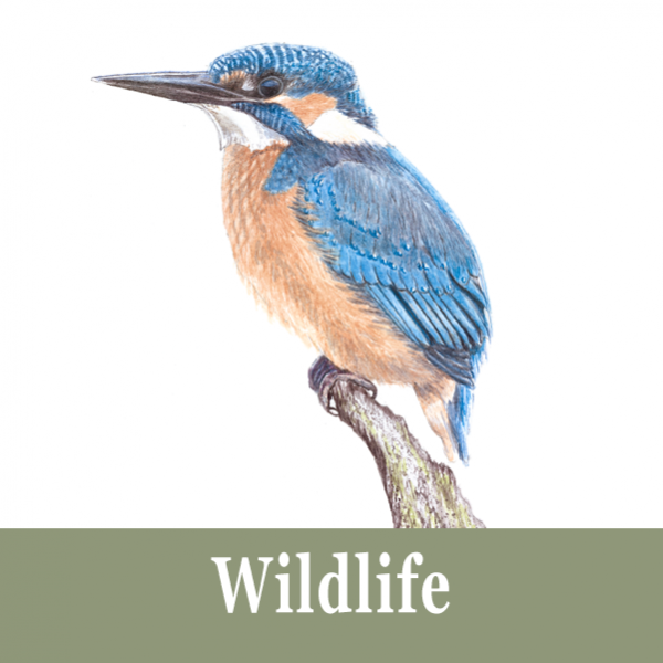 Wildlife Commissions for a Watercolour Painting by Helen Parry