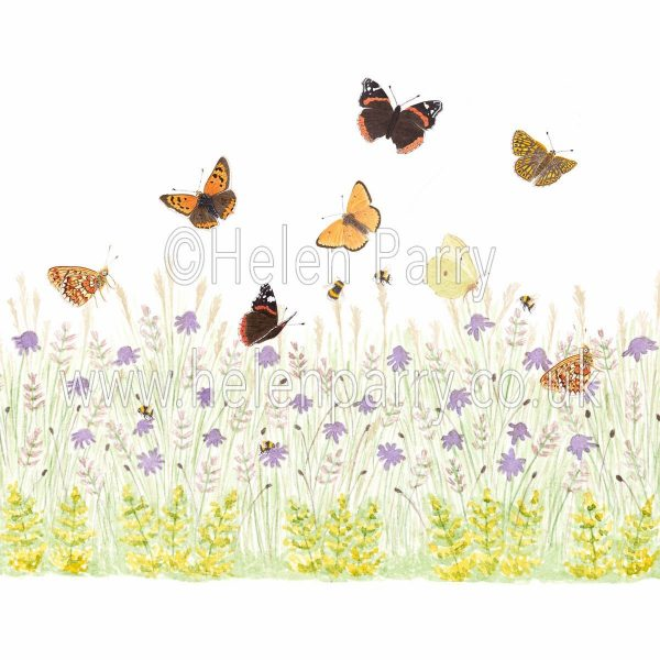 framed card yellow bedstraw and field scabious meadow with butterflies painting design