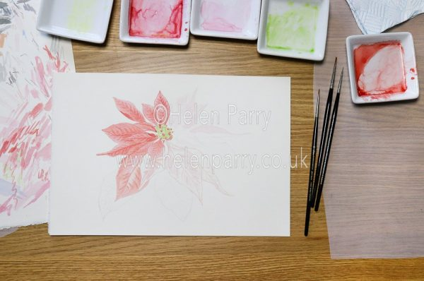 Poinsettia Watercolour Painting in progress
