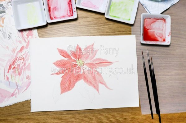 Red watercolour pigment in leaves of plant