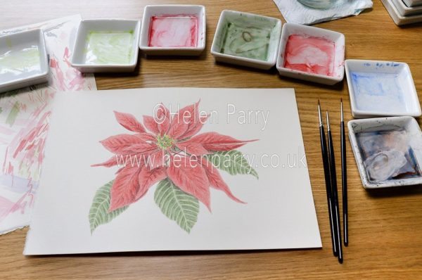 Green watercolour pigment being added to a poinsettia painting