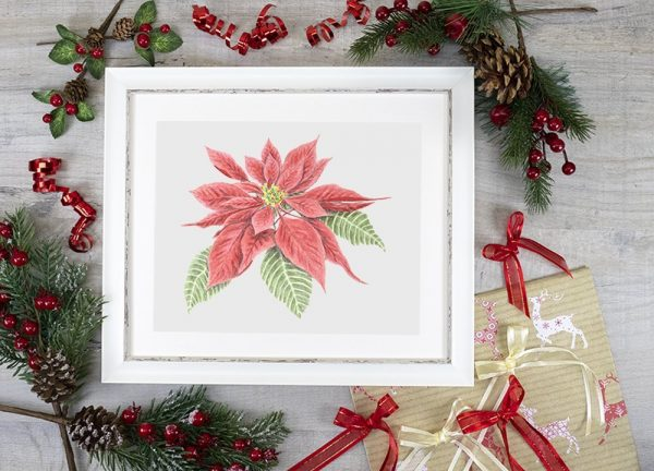 Watercolour painting of a poinsettia plant