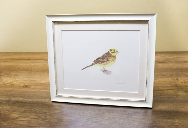 yellowhammer bird Giclée print in a white frame