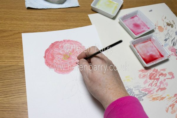 Red Rose Work in Progress Watercolour Painting - Helen Parry Watercolour Artist