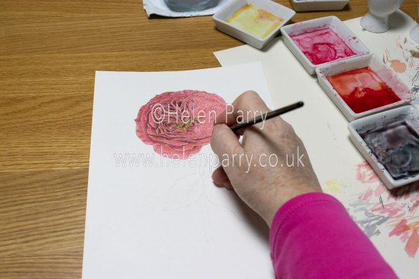 Red Rose Watercolour Painting in Progress - Helen Parry Watercolour Artist