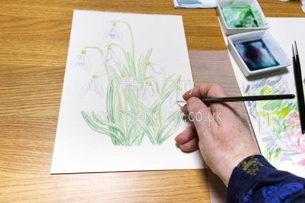 Snowdrop Watercolour Painting in progress - Helen Parry Watercolour Artist