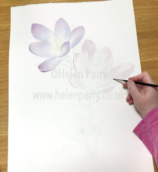 Watercolour Mix in Crocus Watercolour Painting - Helen Parry Artist