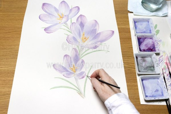 Painting the leaves of a Crocus - Helen Parry Art