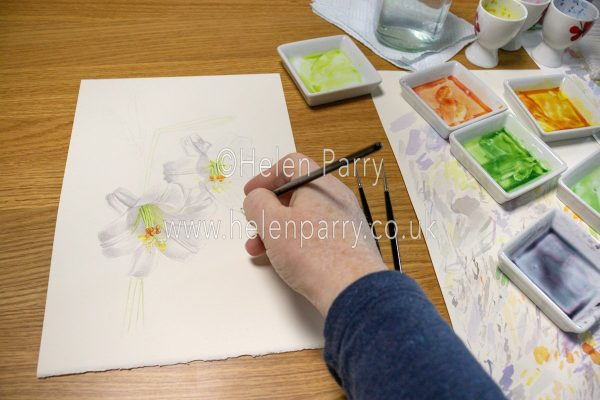 White lilies work in progress - Helen Parry Art