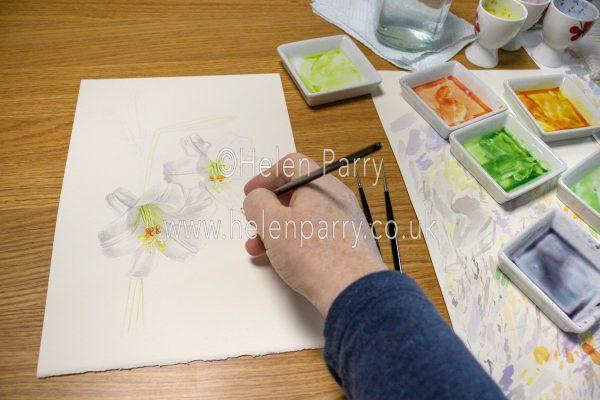 White lilies work in progress - Helen Parry Art