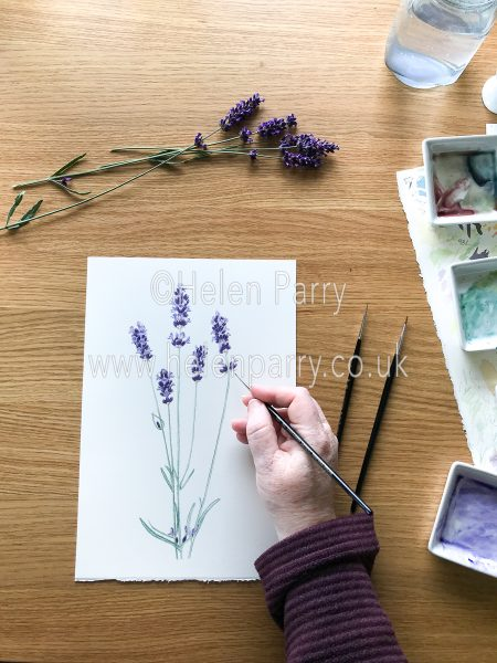 Lavender Watercolour painting completed