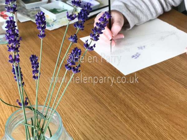 Work in progress lavender watercolour